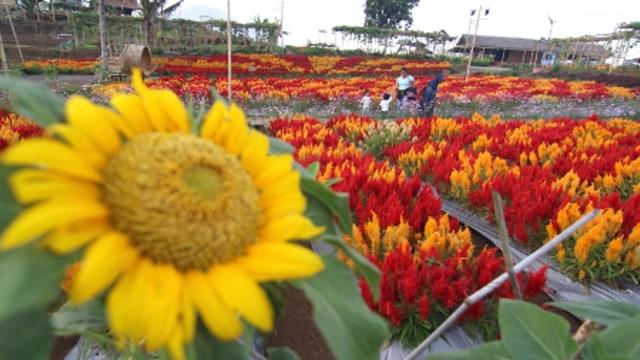 Menilik Potensi Agrowisata di Indonesia (249874)