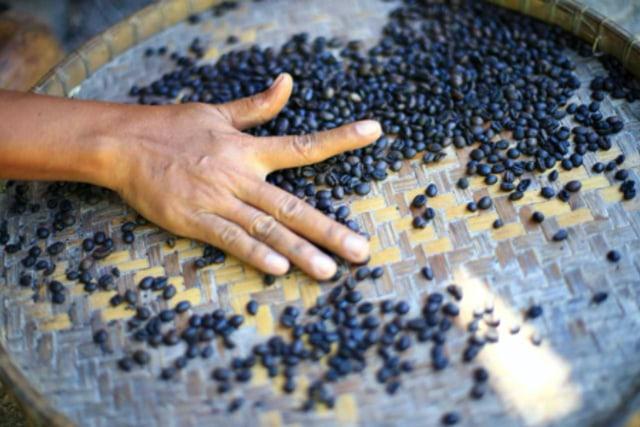 Menilik Potensi Agrowisata di Indonesia (249877)