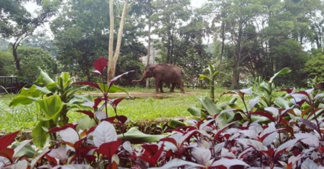 Rekomendasi 5 Kebun Raya di Indonesia untuk Wisata Bersama Keluarga (210103)
