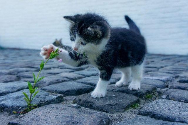 Kenali 7 Tanda Kucing Mengalami Stres (49085)