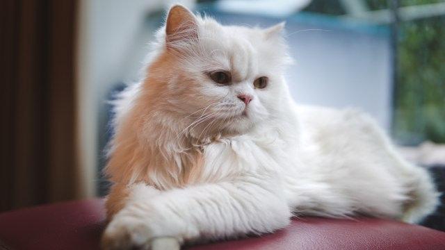 Kenali 7 Tanda Kucing Mengalami Stres (49086)