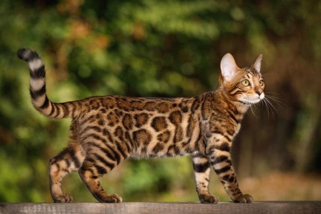 Jiwa Misqueen Meronta Lihat Kucing Peliharaan Termahal, Ada yang Seharga Alphard (339136)
