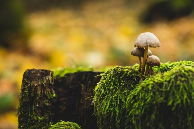 Penelitian Masa Depan: Kemungkinan Jamur Berkerabat Dekat dengan Manusia (39287)
