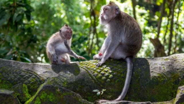 Rekomendasi 5 Destinasi Wisata di Bali yang Terapkan Protokol Kesehatan (124190)
