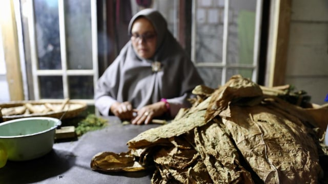 Foto: Kisah di Balik Cerutu Gayo dengan Tembakau 42 Aroma  (14495)
