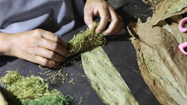 Foto: Kisah di Balik Cerutu Gayo dengan Tembakau 42 Aroma  (171329)