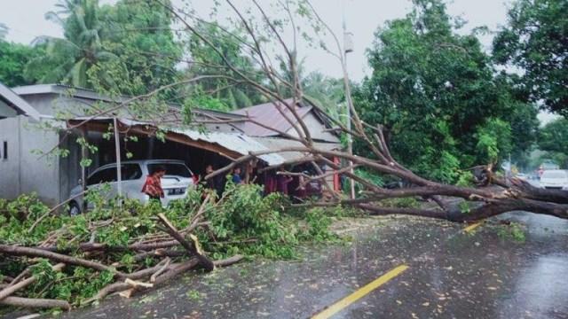 Pohon Tumbang Timpa Rumah Warga di Majene, Sulbar, 2 Mobil Rusak (411336)
