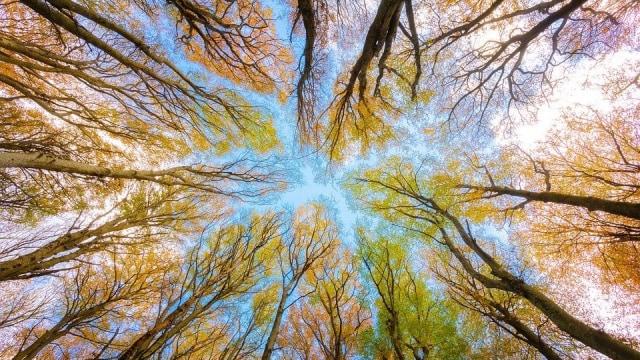 Bisakah Tanaman dan Pohon Tertidur? (41257)