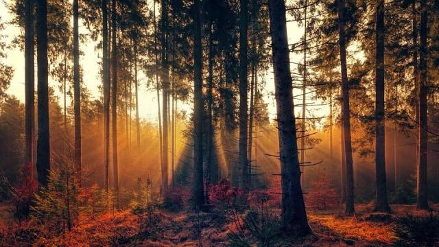 Bisakah Tanaman dan Pohon Tertidur? (41258)