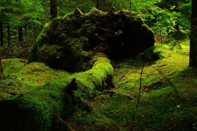 Meski Kecil, Lumut Dapat Memperkaya Keanekaragaman Hayati (90470)