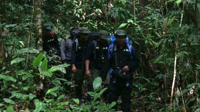 Jejak Pemburu di Rimba Leuser, Aceh: Pakai Jerat dan Senapan Bunuh Satwa Liar (469441)