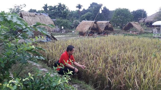 Melihat Agrowisata Berbasis Pertanian di Tengah Kota Batam (89903)