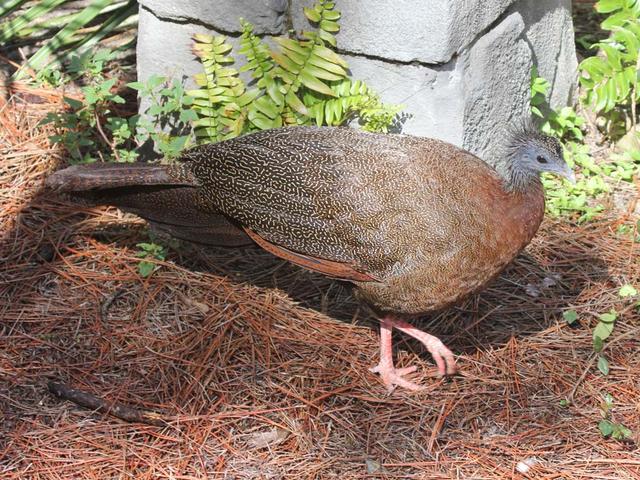 Burung Raksasa Asal Sumatera Ini Punya 100 Mata Tersembunyi (46864)
