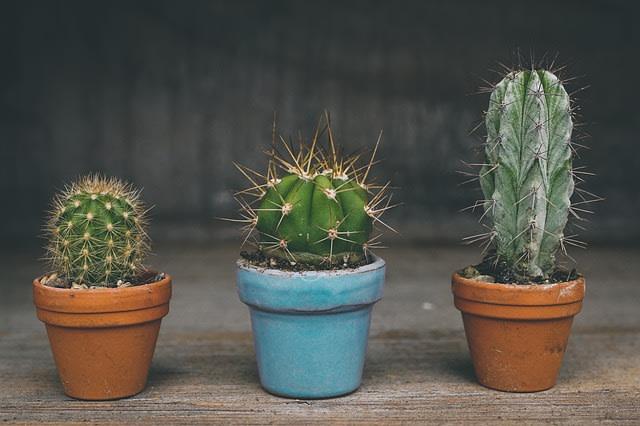 Pengertian Dan Contoh Tumbuhan Hidrofit Higrofit Dan Xerofit Kumparan Com
