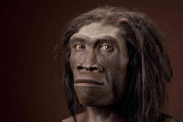 Pithecanthropus Erectus: Penemu dan Penjelasan Mata Rantai yang Hilang (6520)