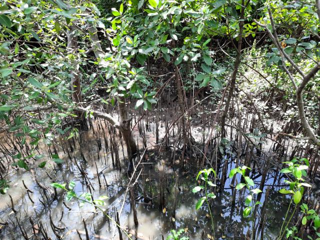 Wisata Ecotourism, Kegiatan Pariwisata yang Cocok Bagi Para Pencinta Alam (10343)