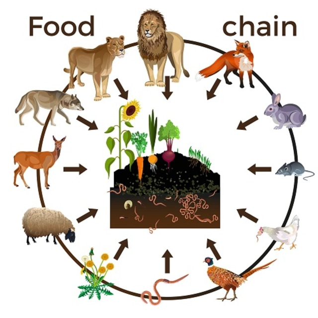 Contoh Rantai Makanan Pemangsa dan Organisme yang Terlibat di Dalamnya (1711)