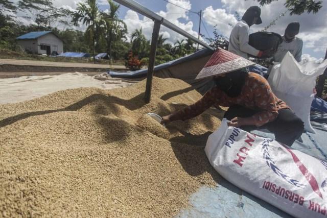 Cek Gudang Bulog di Klaten, Ganjar Kritik Mekanisme Penyerapan Gabah yang Rendah (316539)