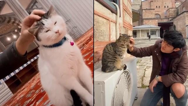 Viral Sultan Gabut, Dadakan ke Turki Cuma demi Lihat Kucing-kucing Liar di Sana (24833)