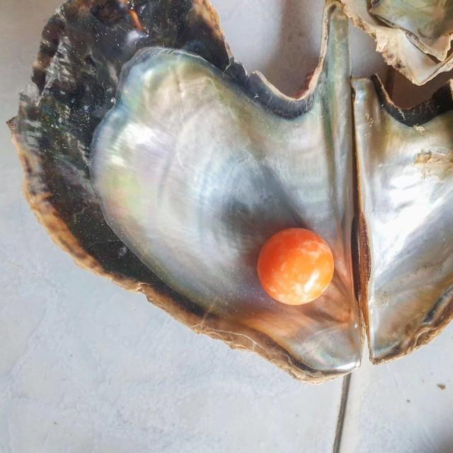 Gelar Pesta Usai Temukan Mutiara Senilai Rp4,6 M, Nelayan Ini Ditangkap Polisi (322479)