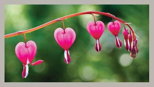 Darimana asalnya simbol hati menjadi cinta (63893)
