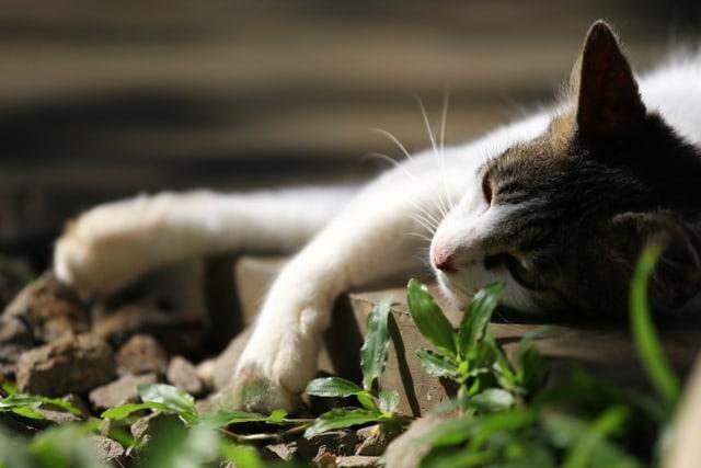 Pembunuh Kucing dengan Kapak di Batam Akui Mengonsumsi Kucing sebagai Obat (338253)