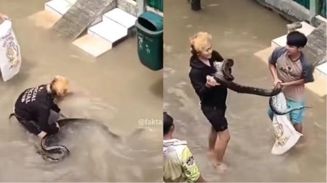 Viral Aksi Pria Tangkap Ular yang Muncul di Tengah Banjir dengan Tangan Kosong (45373)
