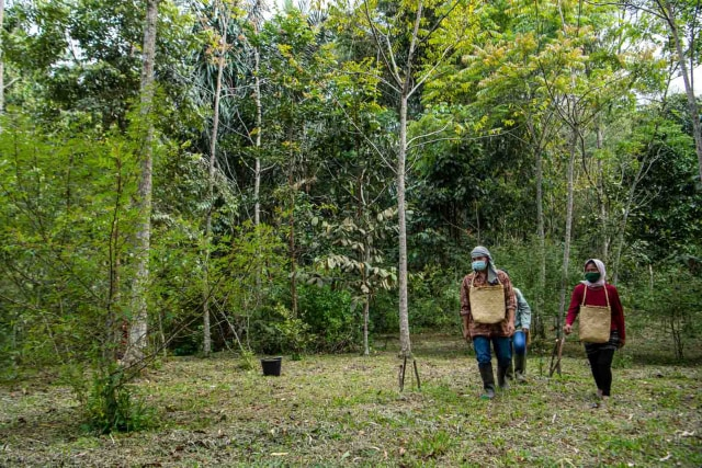Foto: Rempah-rempah Eksotis dari Tanah Batak (597307)