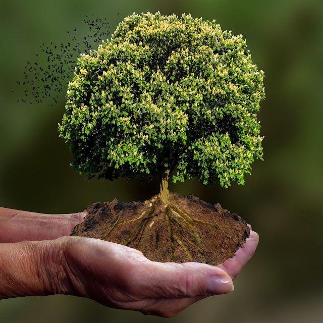 Bagaimana Cara Menunjukkan Kepedulian Terhadap Lingkungan? (60088)