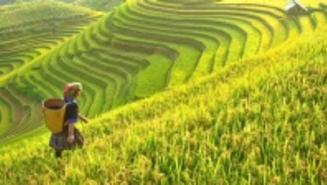 Pembangunan Kawasan Perdesaan Menuju Desa Mandiri (22151)