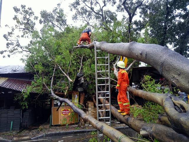 Kabar Baik! Mobil Tertimpa Pohon Tumbang, Bisa Diklaim ke Asuransi (853628)