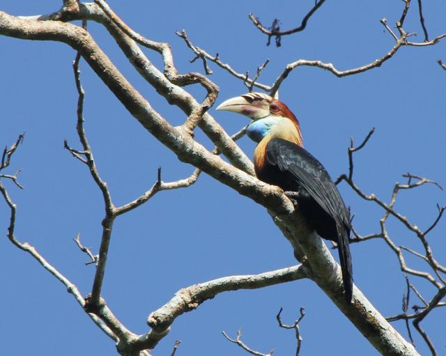 Menjelajahi Keunikan dan Keajaiban 4 Taman Nasional di NTT (Bagian 2) (60782)