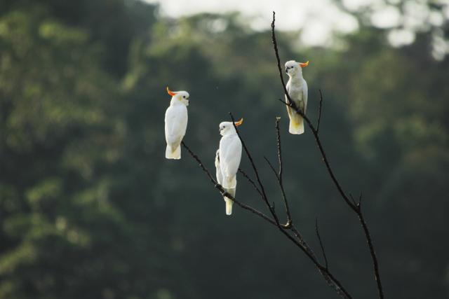 Menjelajahi Keunikan dan Keajaiban 4 Taman Nasional di NTT (Bagian 2) (60785)