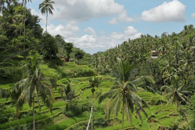 Kearifan Lokal: Pengertian, Ciri-Ciri, Fungsi, dan Bentuknya di Indonesia (108148)