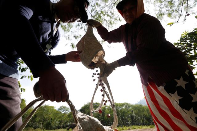 Foto: Melihat Eksistensi dan Semangat Petani Kopi Gayo di Tengah Pandemi (308138)