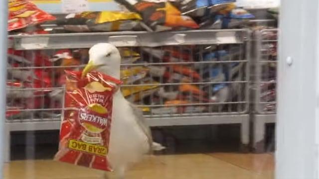 Burung Camar Terekam Kamera Curi Sebungkus Makanan dari Minimarket (27998)