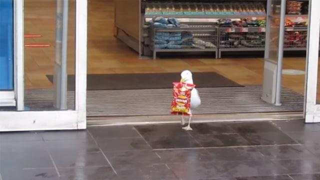 Burung Camar Terekam Kamera Curi Sebungkus Makanan dari Minimarket (27999)
