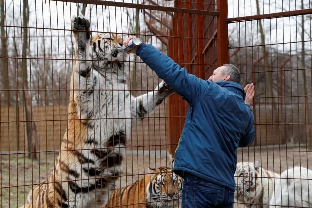Foto: Melihat Kebun Binatang yang Terdampak Corona di Hungaria (114430)