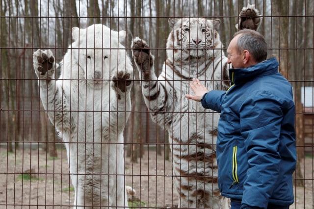 Foto: Melihat Kebun Binatang yang Terdampak Corona di Hungaria (114428)