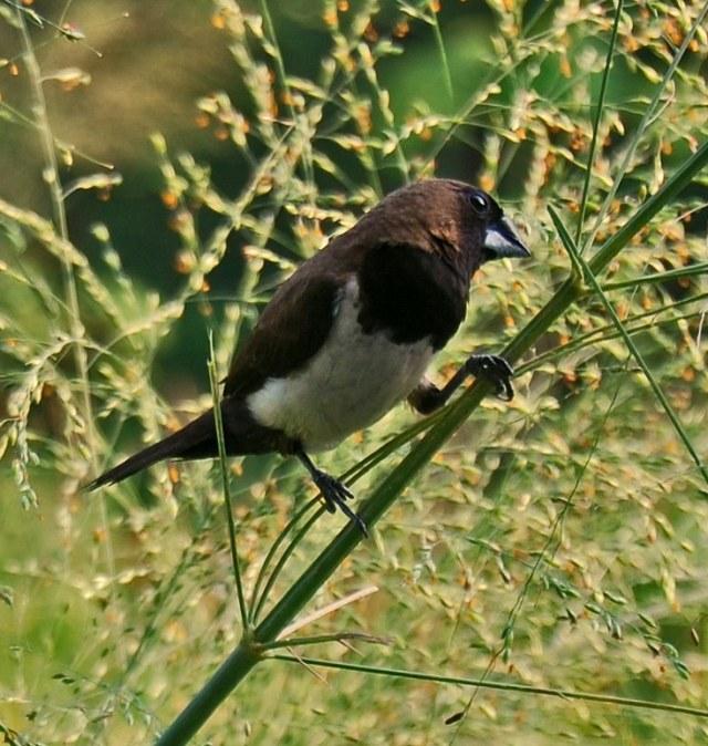 Peneliti LIPI soal Rencana Basmi Burung Emprit di Sleman: Bakal Ganggu Ekosistem (218414)