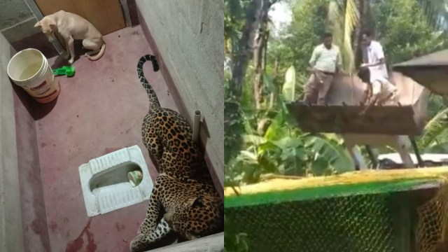 Momen Mendebarkan Evakuasi Anjing Terjebak 7 Jam Bersama Macan Tutul di Toilet  (57625)