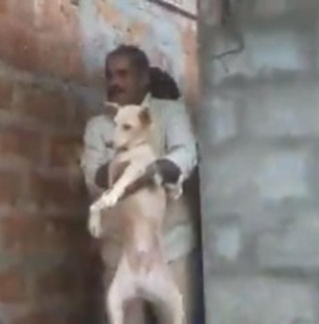 Momen Mendebarkan Evakuasi Anjing Terjebak 7 Jam Bersama Macan Tutul di Toilet  (57626)