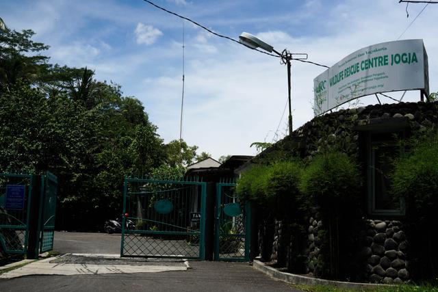 Foto: Rehabilitasi Satwa di Tengah Pandemi (46609)