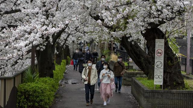 Pertama Kalinya Sejak 1.200 Tahun, Bunga Sakura di Jepang Mekar Lebih Awal (753148)