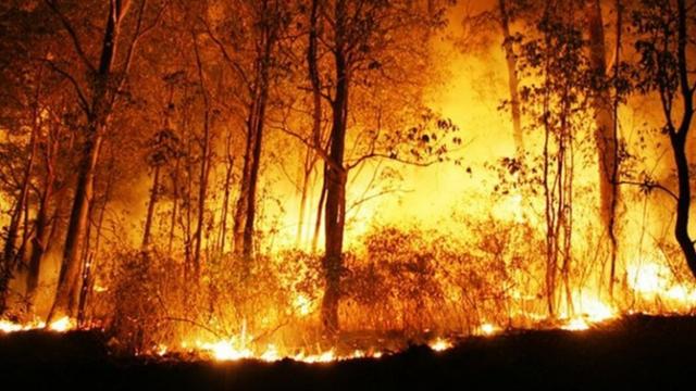 Kebakaran Hutan: Kudeta Alam Terbesar di Kalimantan (858025)