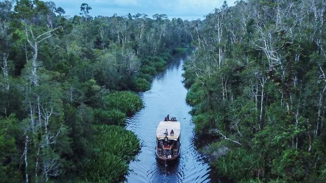 Taman Nasional Tanjung Puting Perpanjang Penutupan hingga 15 Agustus 2021 (157558)