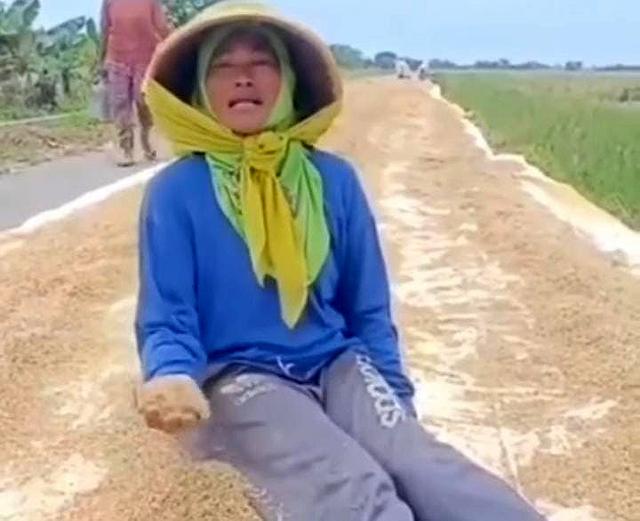 Petani di Cirebon Keluhkan Harga Gabah Kering yang Turun Drastis (793562)