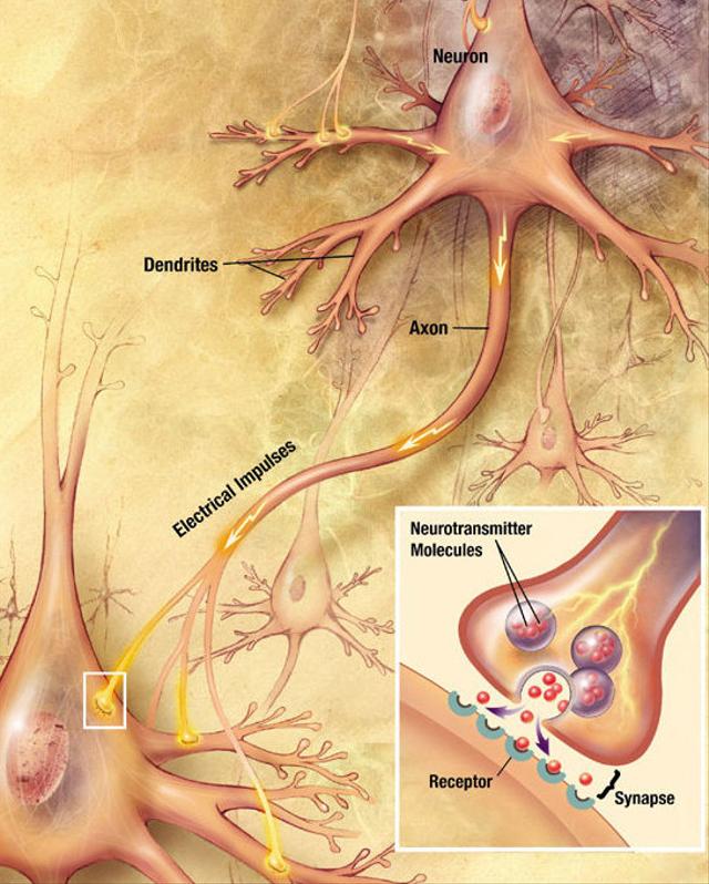 Electromyography (EMG), Ketika Otot Rangka Manusia Menghasilkan Listrik (93154)