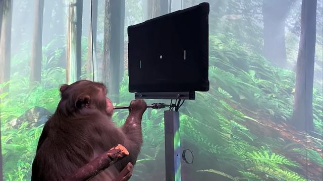 Ini Bukti Chip Buatan Startup Elon Musk Bikin Monyet Bisa Main Game via Telepati (17858)