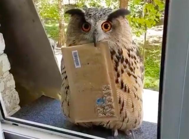 Viral Burung Hantu Bawa Surat, Mirip Hedwig di Film Harry Potter (397286)